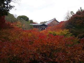 通天橋の紅葉