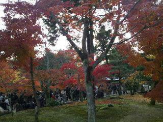 月下門周辺の庭の紅葉