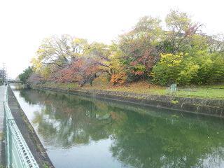 琵琶湖疎水の紅葉