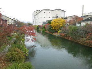 伏見濠川の紅葉